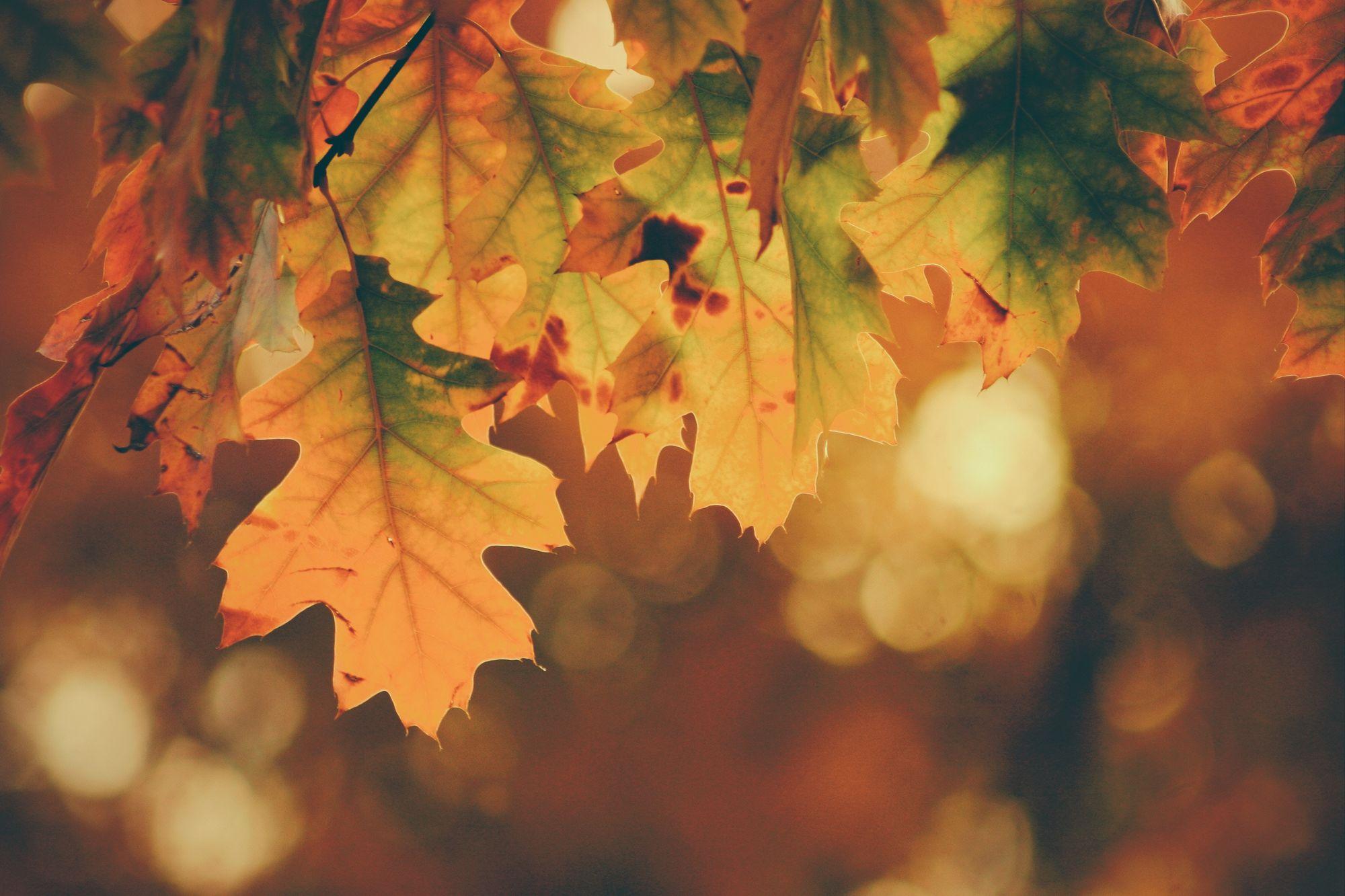a poem about Autumn